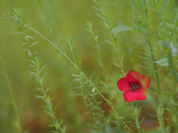 little beauty by Schreima