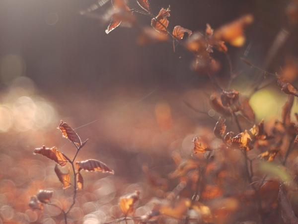 autumn by Schreima