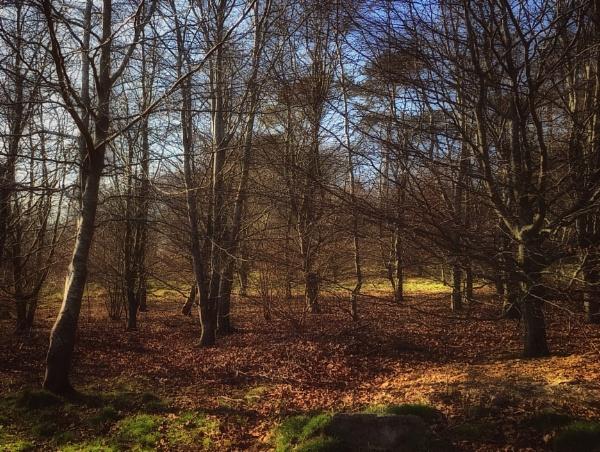 Woodland by purplejellyfish500