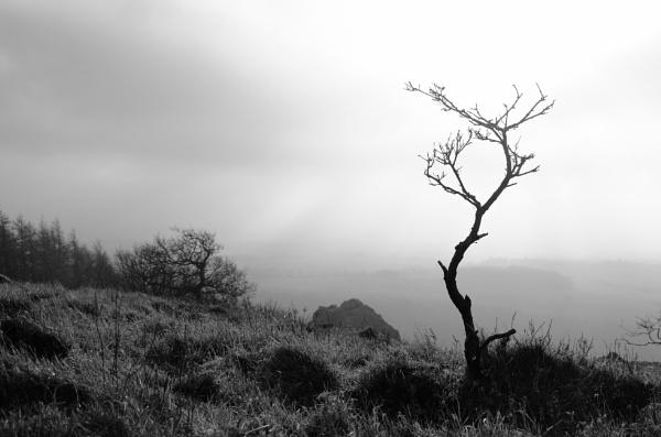 Wrekin Trees II by optik