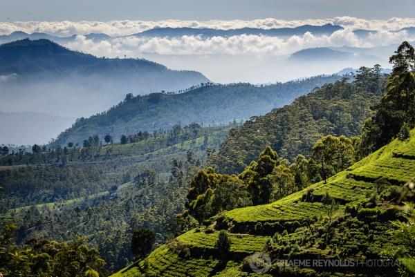 Sri Lankan Cloud Forest by Graeme_R