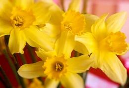 Yellow Quartet