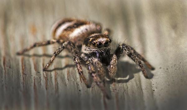 Spider by DJSpiderpig