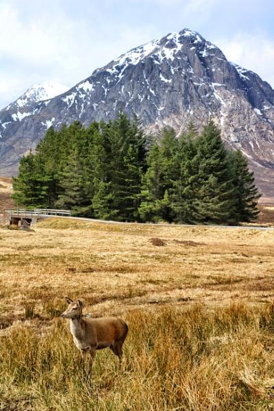 Deer below Buachaille Etive Mòr by DanfromScotland