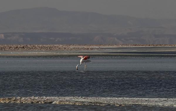 Flamingo Ballet by mammarazzi