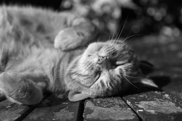 Lazy Days by TimJ