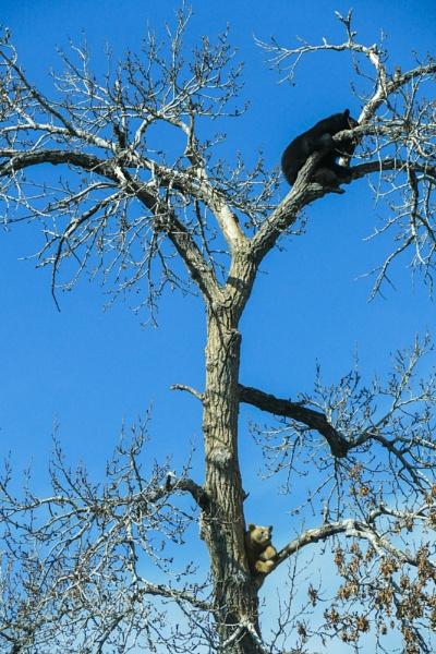 Siesta in a Tree by StrayCat
