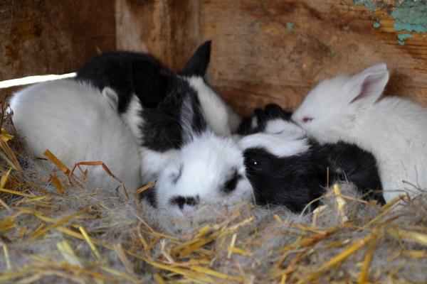 little Rabbits by Laslo