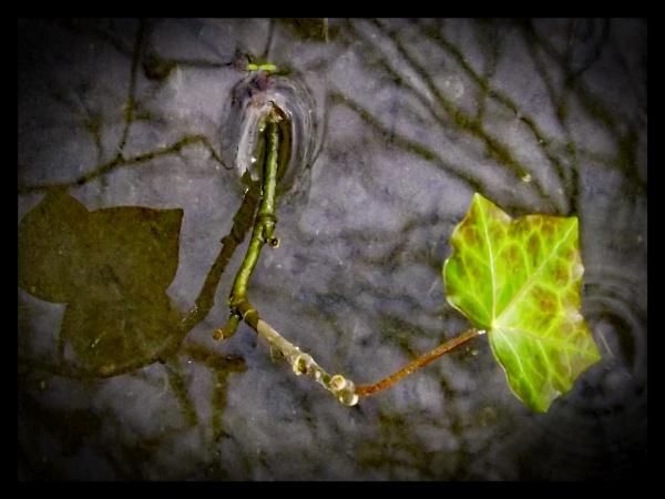Single leaf reflection by ZoeKemp