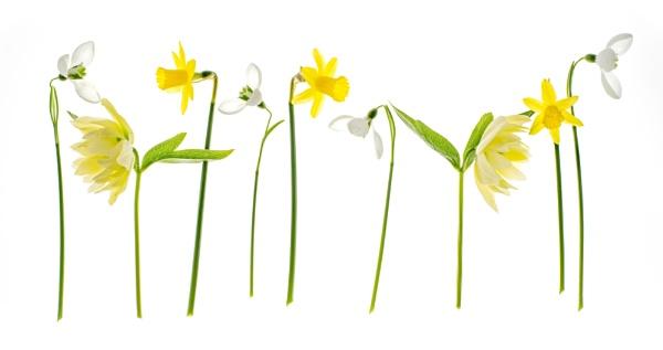 Spring by flowerpower59