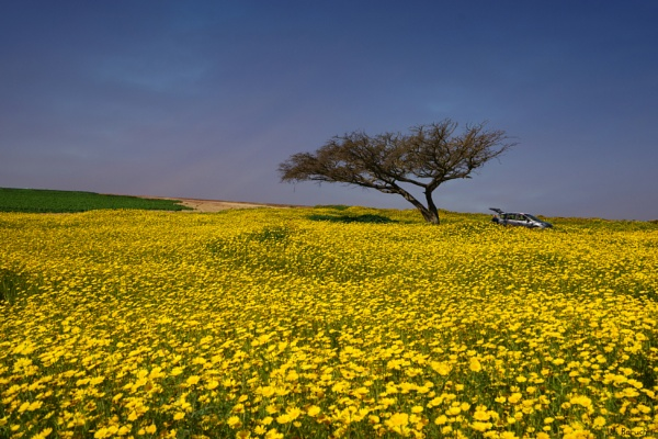 Yellow  Spring by ubaruch