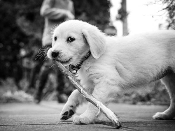 Puppy love by Drummerdelight