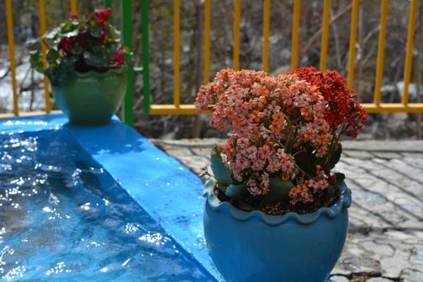 Spring Flowers by alimorshedizad