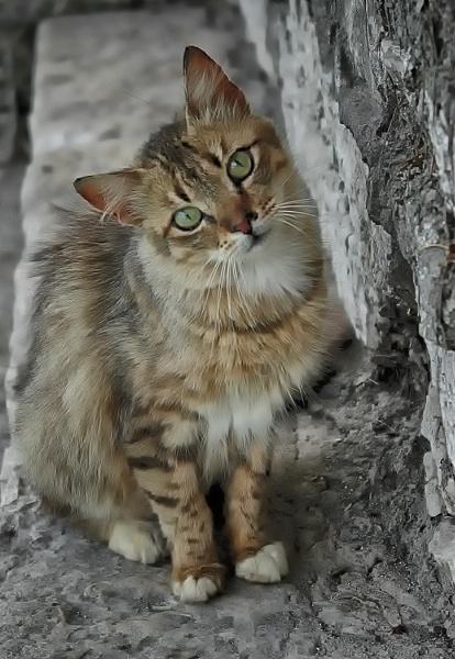 Greek Cat by Zydeco_Joe