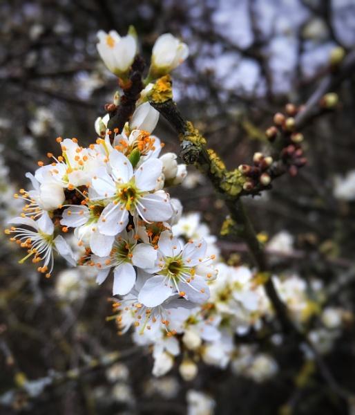 Spring by purplejellyfish500