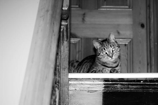 curious cat by HoneyT