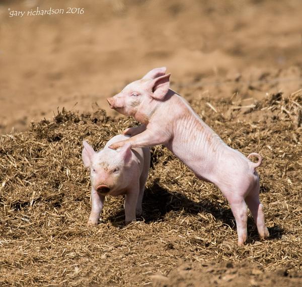 leap pig ?? by djgaryrichardson