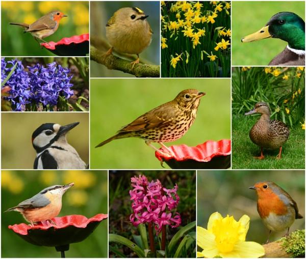 Springtime Garden by Jenny-D
