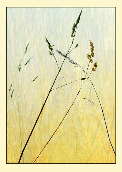 Grass by Irishkate