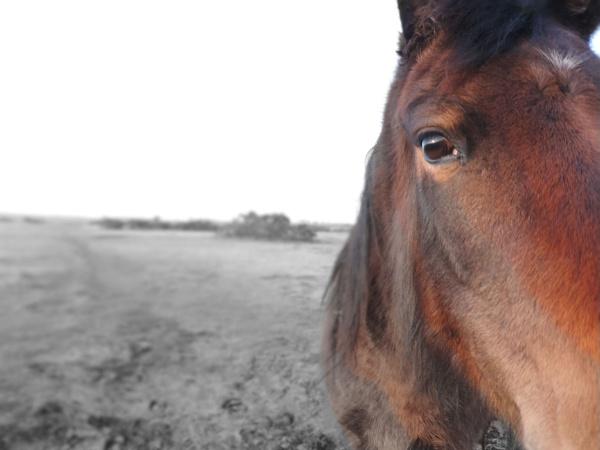 Horse whisper by steve_i