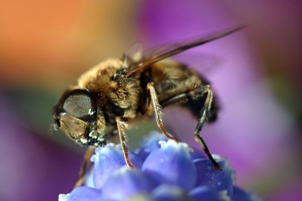Bee Feast by blueninjasix