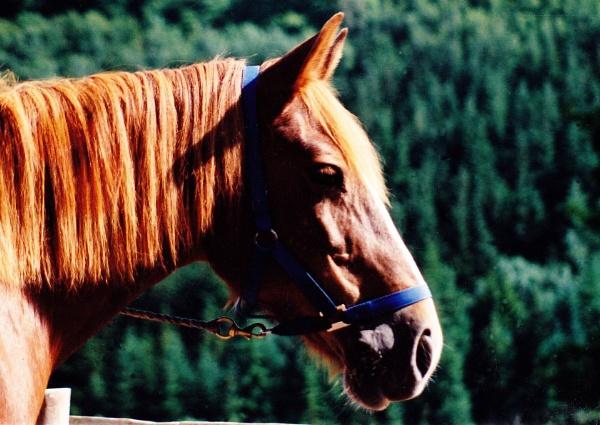 The horse by Captsaigon