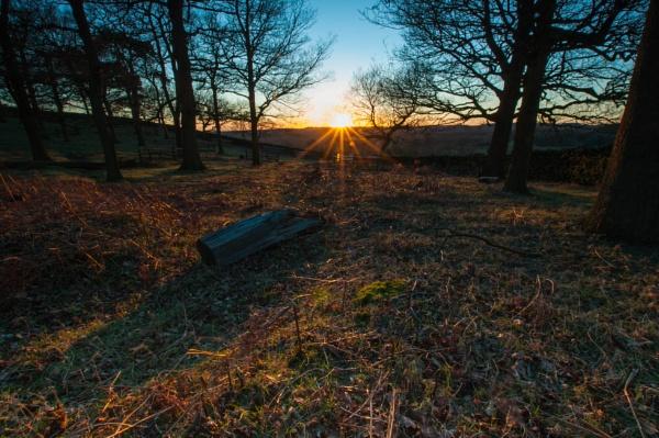 Evening sun at Bradgate Park by Brocknr