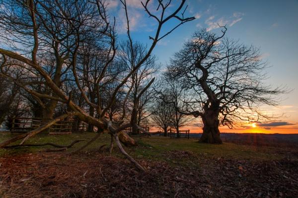 Sunset at Bradgate Park by Brocknr
