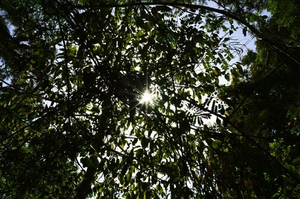 Light and greenery by kingmukherjee