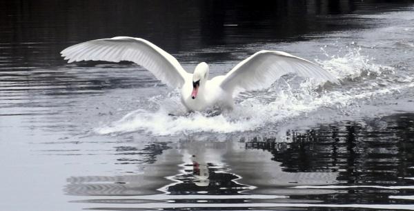 Splash Down by SUE118