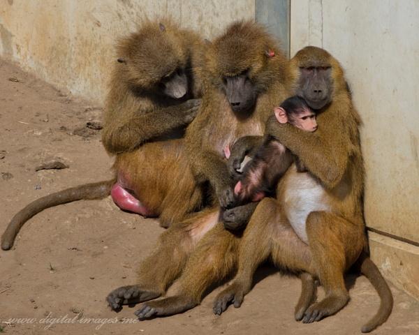 A Family Hug by Alan_Baseley