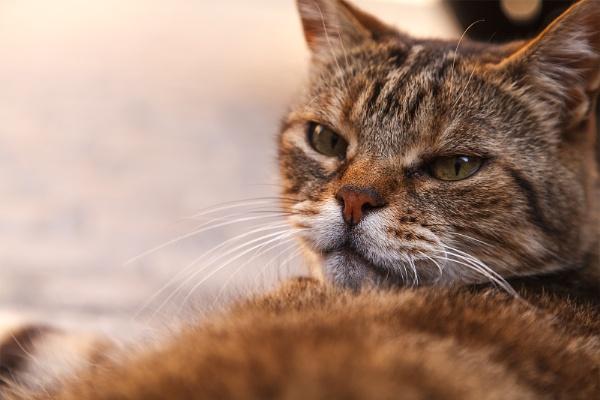Monsieur pussycat by Mendipman