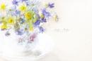 Sweet Spring by jackyp