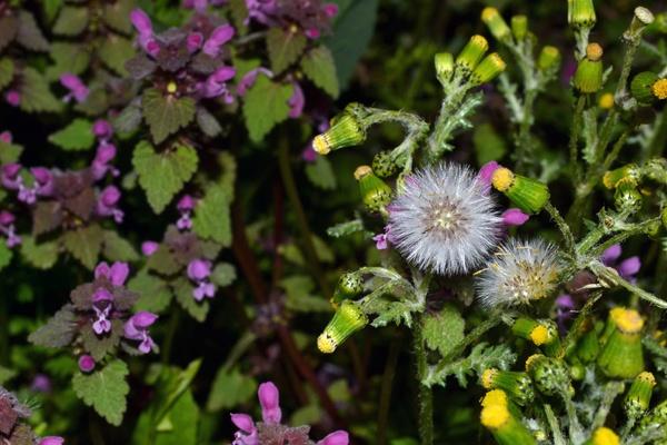 wild flowers by Laslo