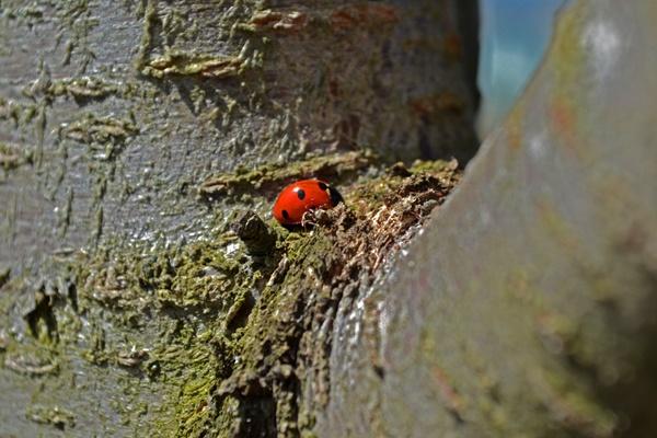 Ladybird by Laslo