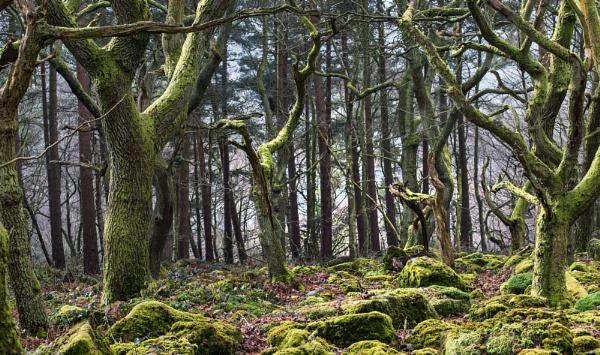 Dancing Trees..... by Trevhas