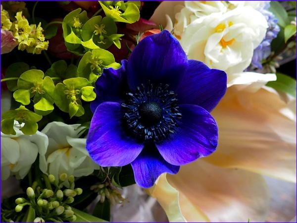 A Birthday Bouquet by Mavis