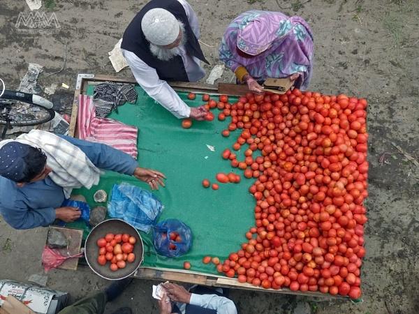 Tomato by Majnoon