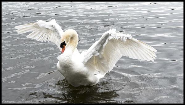 My Wings by robert5