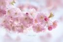 Blossom and Buds by jackyp