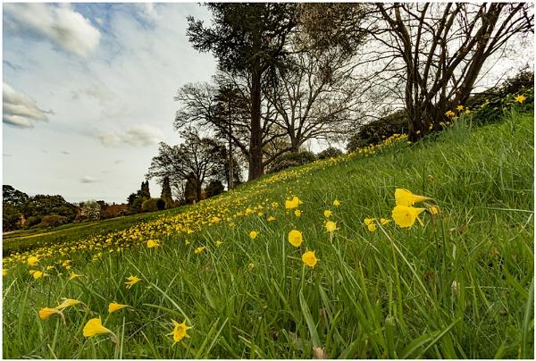 Alpine Meadow by capto