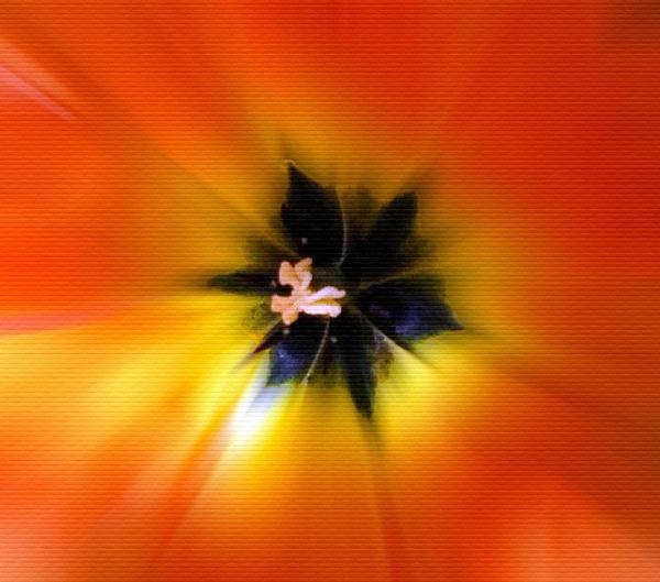 Orange lily by Mototaur