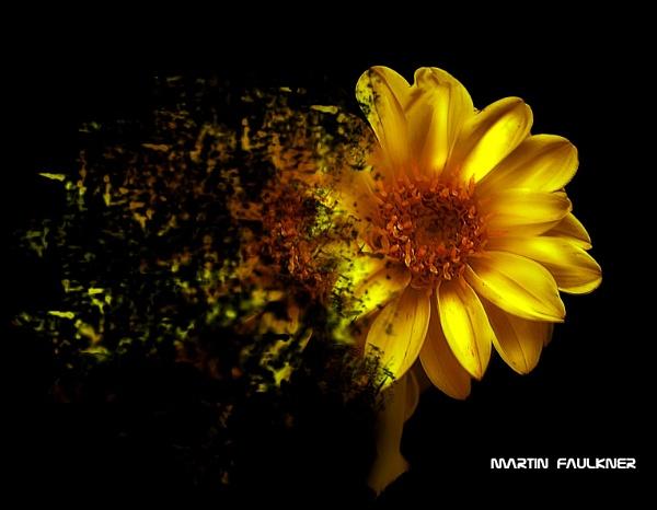 Daisy by martfaulkner