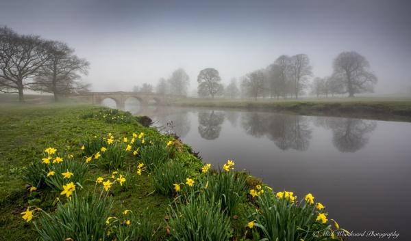 Chatsworth Daffodils 2 by kojak