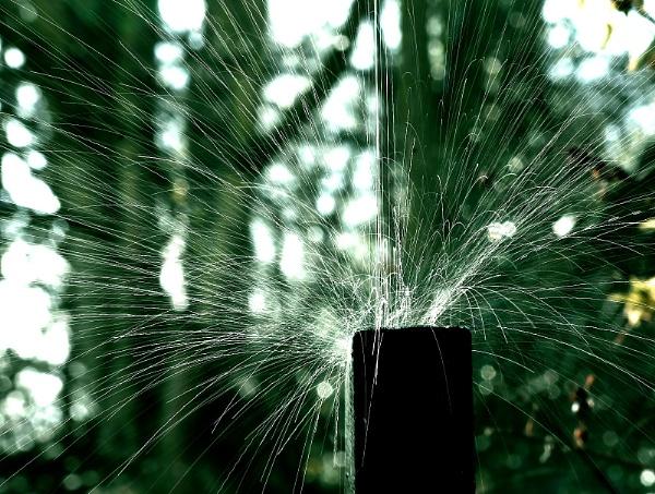 Garden fireworks by turniptowers