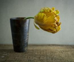 Tulip in horn cup