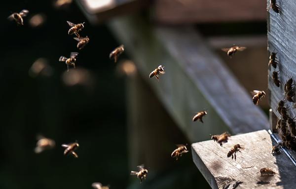 Bee happy by kuipje