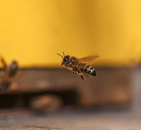 A Tast of Honey by kuipje