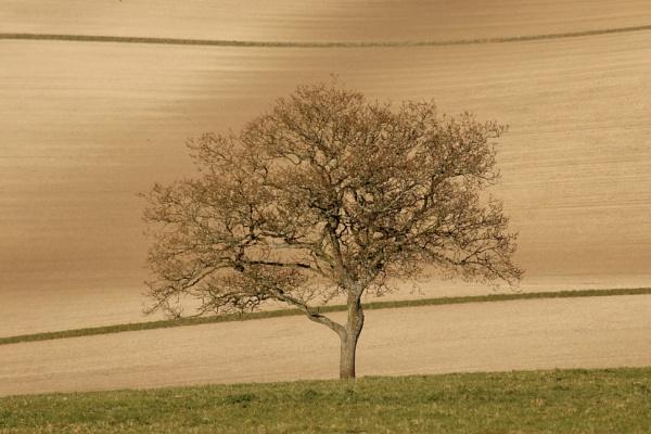 Lone Tree by Justine67