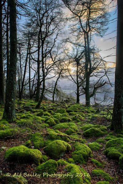 Moss Bros by Alffoto